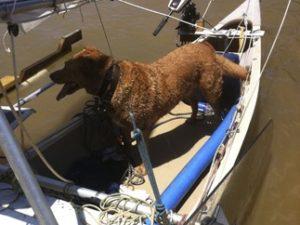 Sailing Canoe Rudder 2